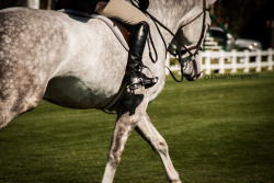 oliviaaadoddd:  (C) O.Dodd Photography Gulfport Week I Hunter Derby