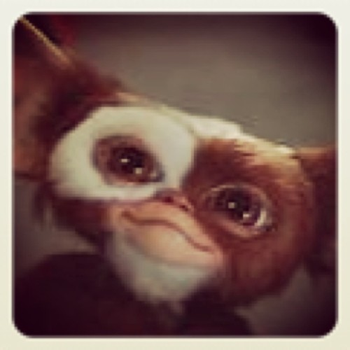 Hehe proof that cute things aren't always good #mogwai #gremlinsmovie #alwayswantedone #stillwantone