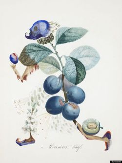Dali's Botanical Prints Auctioned