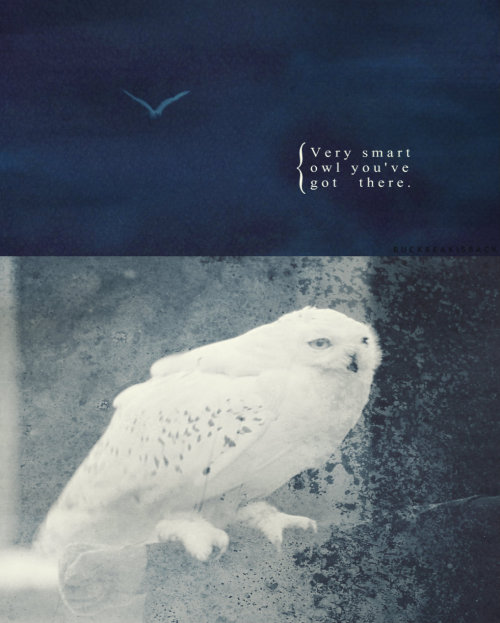 buckbeakisback:  The Potter Generation [x] → 7. Hedwig or Dobby