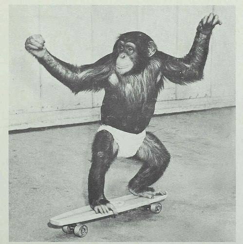 skateboardermagazine:  Happy Friday you monkeys