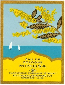 (vía mimose inspiration / art deco)