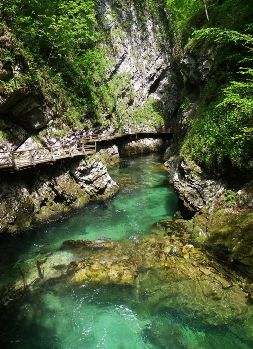 visitheworld:  One of the most beautiful river gorges in Europe, Vintgar Gorge, Slovenia (by chris durham).