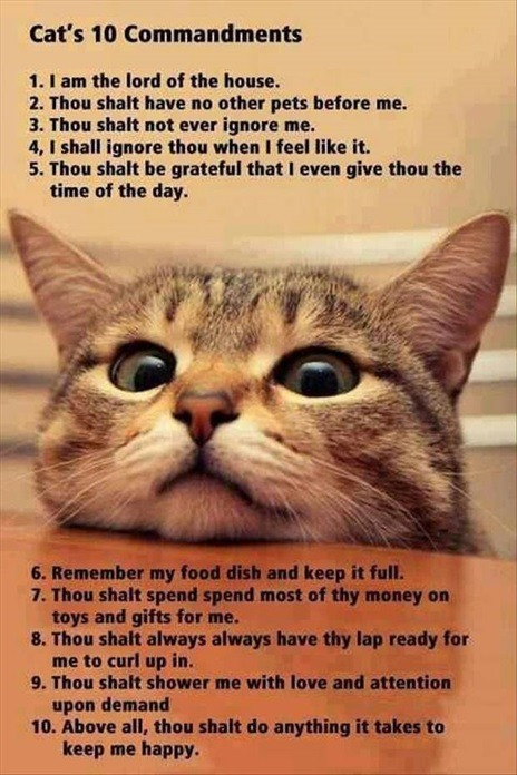 The Cat 10 Commandmentshttp://99gag.tumblr.com/
