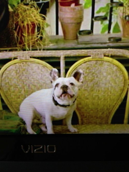 look at that frenchie face. in the show he gets a happy ending.