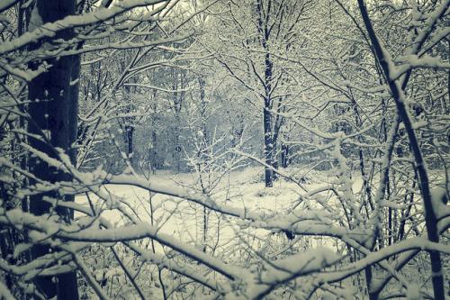 greekg0ds: winter