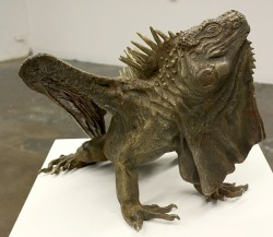 Iguana Dragon by Bailey Henderson via ianbrooks.me