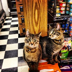 Stopping at a local market on the way home yields #kitty #cat surprises! (at E & E Fine Foods)