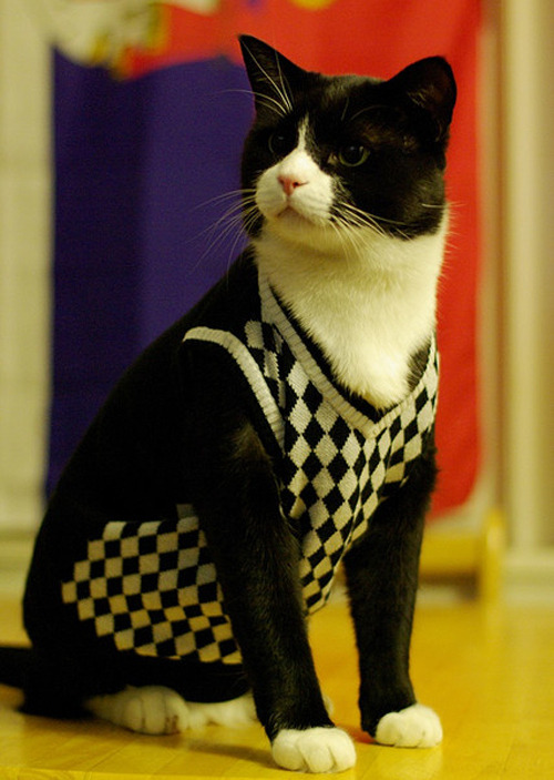 mcgarrygirl78:  I will always reblog kitties in sweaters.