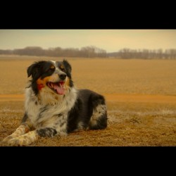 handsomedogs:  Pepper the tri-color border collie! The smartest dog in all of South Dakota! #generalsubmission