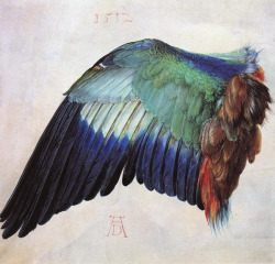 Wing of a Roller (1512) by Albrecht Durer