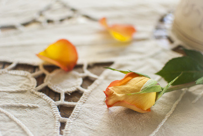 (via Yellow Rose on a Tablecloth Art Print by Bobbi Lewin | Society6)