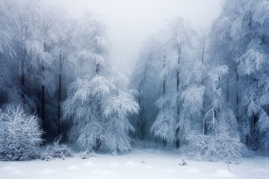Frozen Forest Photo by Evgeni Dinev (via:itlandscapes)