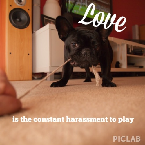 withpermission:  #frenchie #love