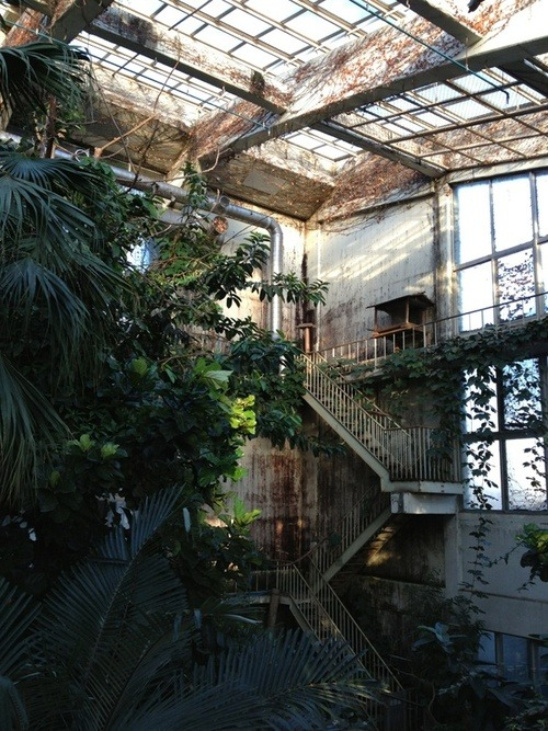 fuckyouverymuch:  We would like to know where this is.     Green house of tropical birds in Inokashira park     in Kichijoji, Tokyo… 井の頭公園 lost in translation…;) ok?