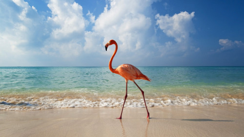 notmyvirginears:  flamingo beach