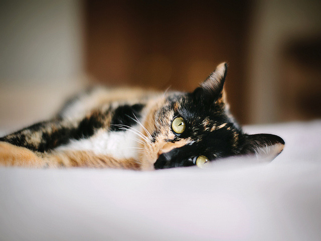 photogenicfelines:  (`Jess)
