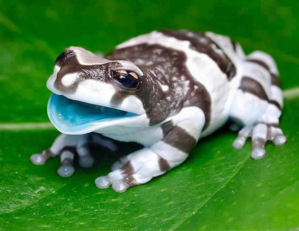 alisonbecker:  Is it weird that I saw this frog and thought: THAT'S THE COLOR PALETTE I WANT FOR MY LIVING ROOM?