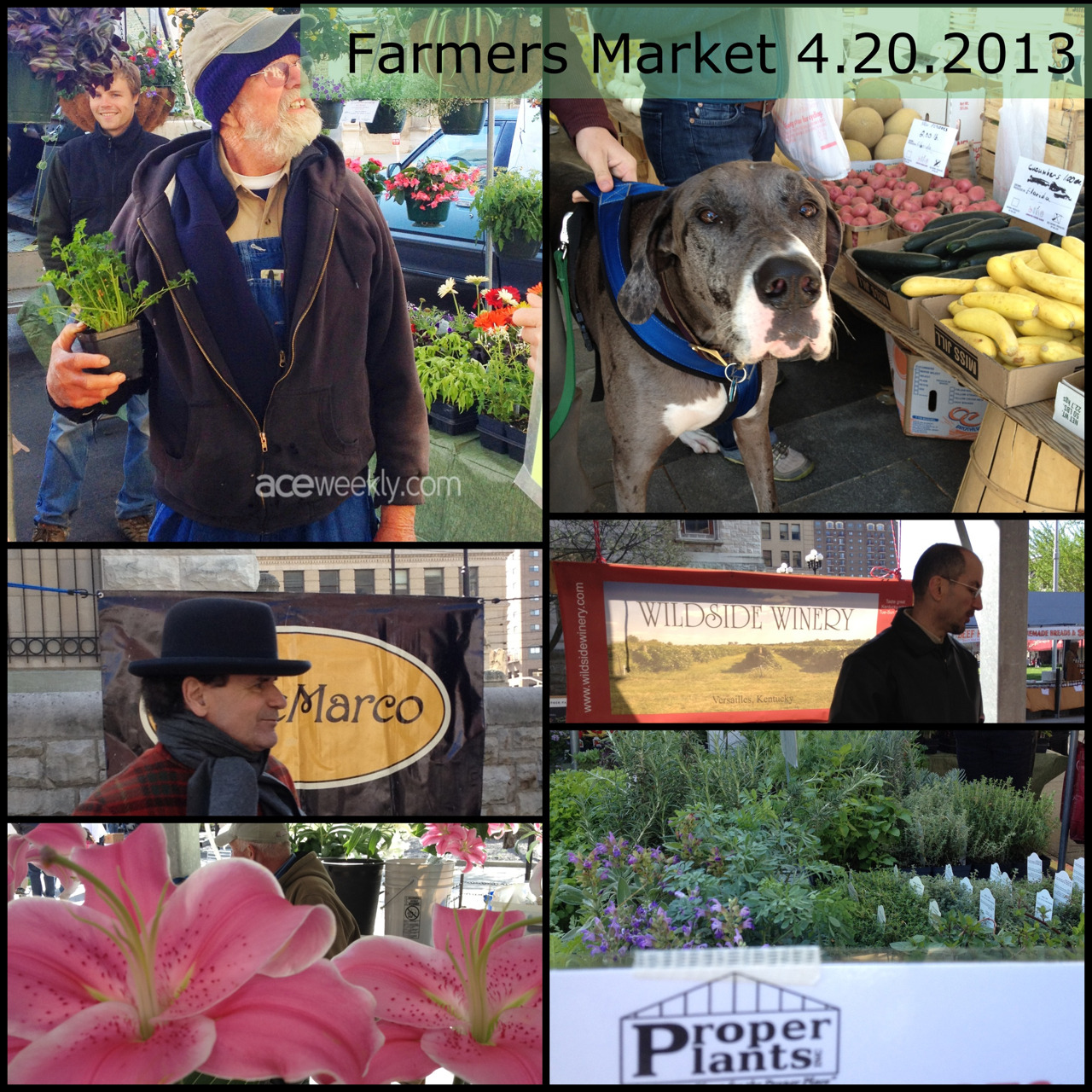 It was a GLORIOUS morning at Farmers' Market. High points: the pink lillies, Jacob's omelets and hot chocolate, and Russell (at Proper Plants) had the cutting celery plants and his famous tomato hanging baskets. (He has the best tomato plants in town.)