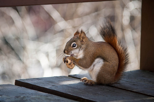 Lunch Time! (by Justin Lo Photography)
