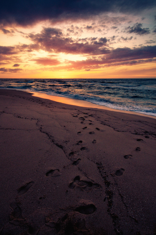 brutalgeneration:  footsteps (by Dennis_F)