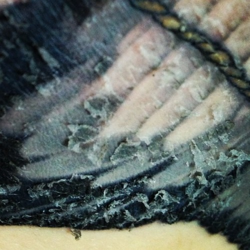 Yummy. #tattoo #wing #skin #nasty #feathers