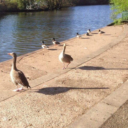 #sunbathing #birds #park #water #cool #littlethings #sunny #pretty #instamood #animals