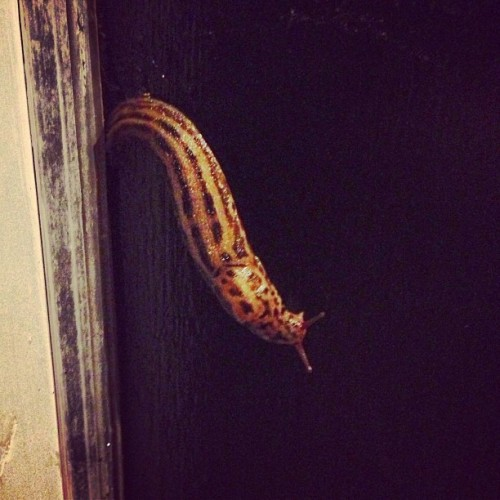 #monster #slug #ew #gross #missouri #missouricreatures