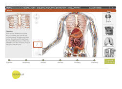 Spongelab Interactive Web Design / Illustration Live site: http://spongelab.com Collaboration with Lorraine Trecroce and Wensi Sheng