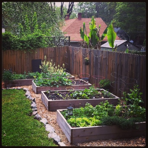 Garden in flux: winter veggies still hanging on, most of first round of spring/summer veggies are planted.