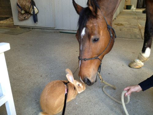 barn-brat:  cosmothebunny:  Cosmo made friends with Chewy!   This is so adorable!