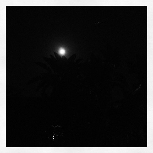 Another beautiful night with a bright moon and a couple of mysterious lights… ;) #ufo #moonlight #miami