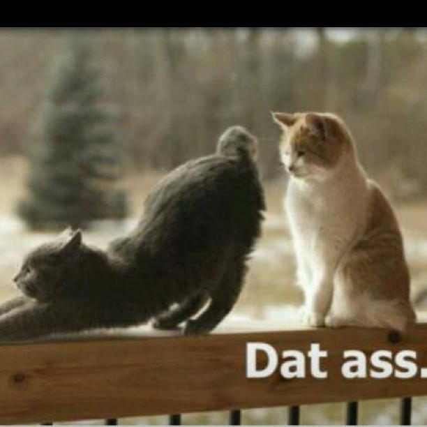never gets old lolol #ass #datass #cats