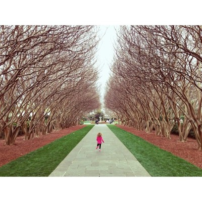 Crape Myrtles + Mo (at Dallas Arboretum and Botanical Garden)