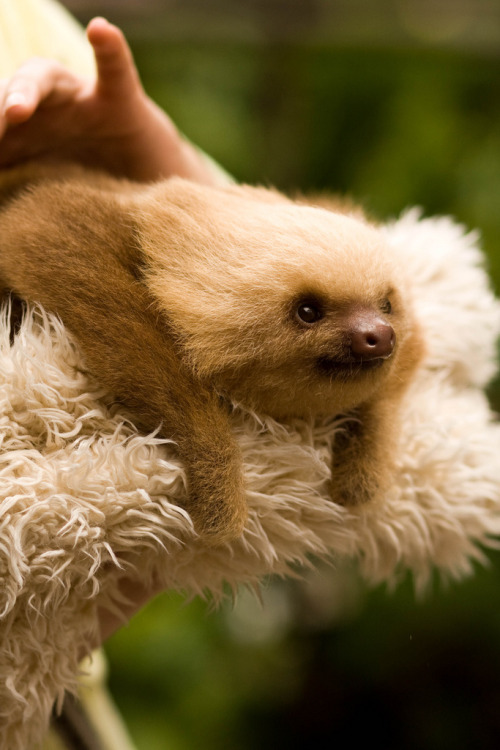 vurtual:  Sloth (by asirap)