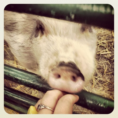 I love today. I met the most amazingly cute #pig