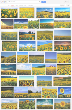 "oessa:  ""sunflower fields"" 5:03pm 28/04/13"