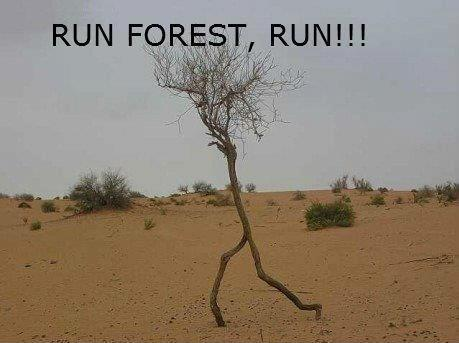 emberlys-mommy:  RUN FOREST RUN LOL