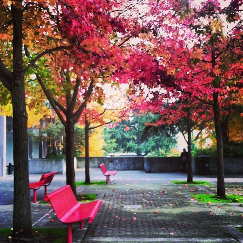 Can't even handle these amazing fall colors at @seattlecenter