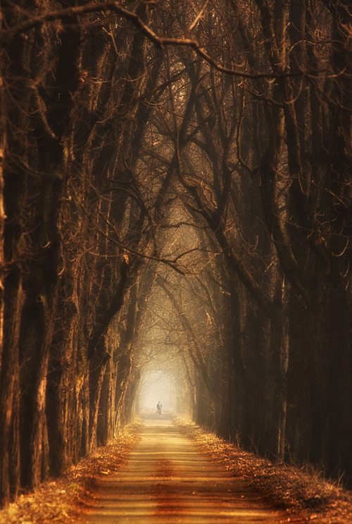 e4rthy:  In Autumn Tunnel by Marcin Sobas