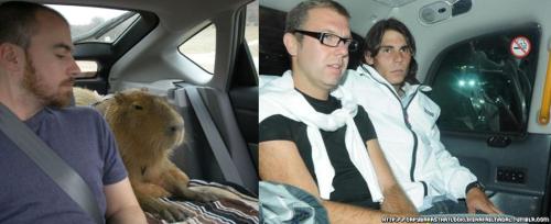 backseat capybara