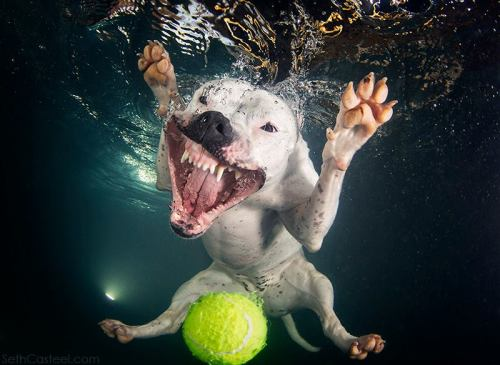 Jump in the pool 'Underwater Dogs'See more of his photos.