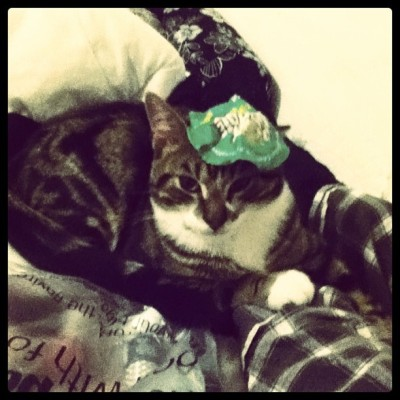 The cat had a pot noodle beret on last night🇫🇷
