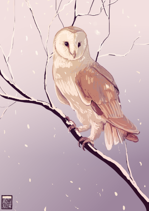 A Barn Owl for *TheBeetle<3  $3 Birds