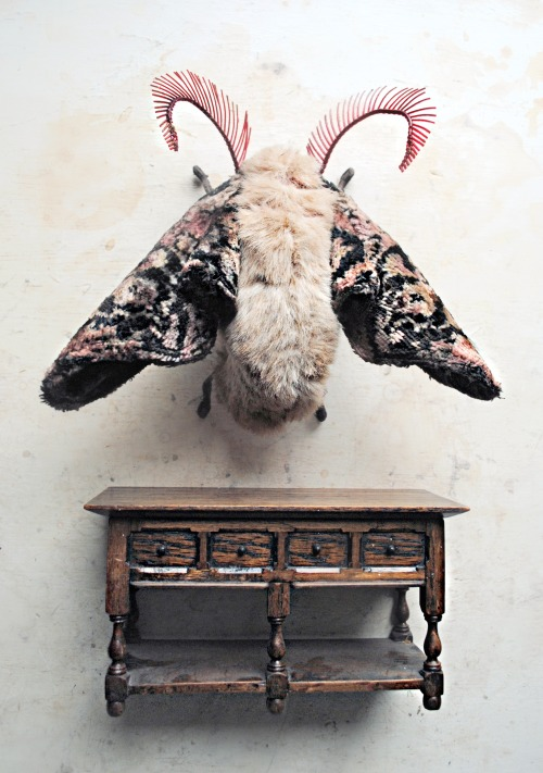 ohmisterfinch:  Textile Moth By Mister Finch