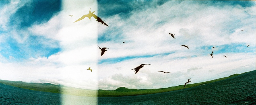 """Frigate Birds""  Horizon Perfect"