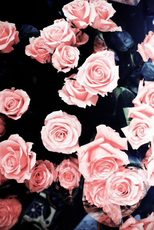 Agh. Roses are so pretty.