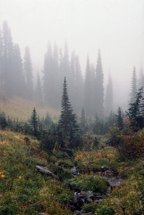 wandering-deer:  Untitled by behindtrees on Flickr