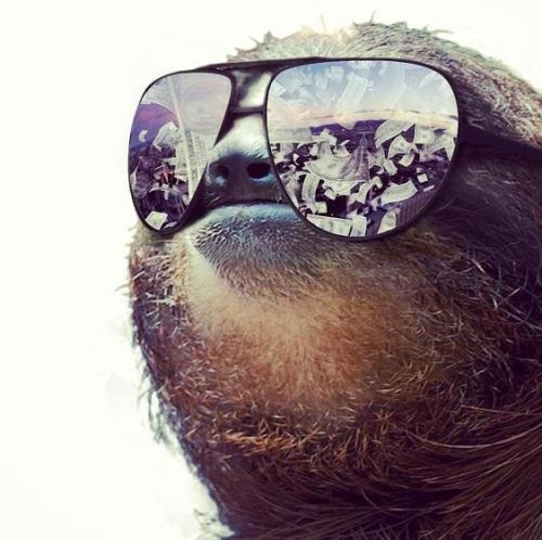 sloth life. follow this blog!