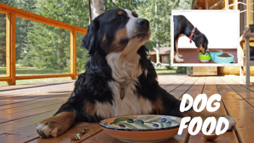 The Benefits of Buying Dry Dog Food #animals